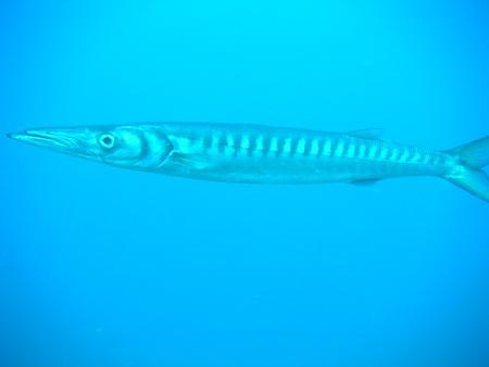 absolute diving!  Puerto del Carmen,Kanarische Inseln,Spanien