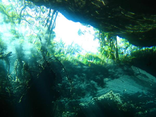 Cenotes, Cenoten gemischt (Cenoten Playa del Carmen,Tulum und Meer),Mexiko
