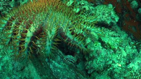 Bleue Marine Divers,Praslin,Seychellen