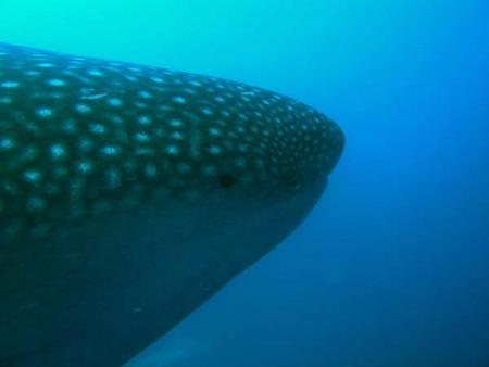 MS Lammer Law,Extra Divers,Galapagos,Ecuador