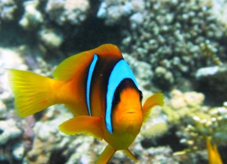 Diving Ocean - Hotel Prima Life Resort,Safaga,Ägypten
