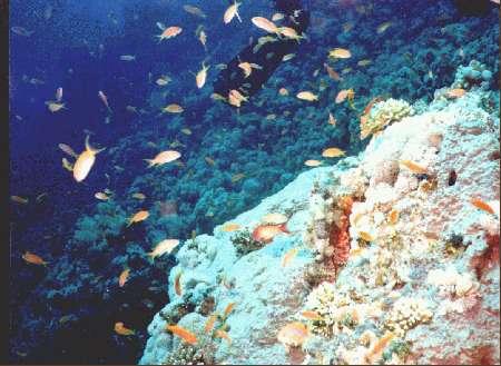 Paradise Divers,Sol y Mar Hotel,Safaga,Ägypten