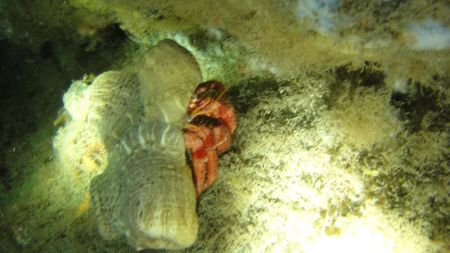 Diving Nettuno,Italien