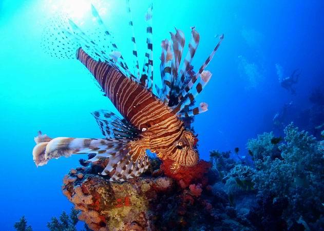 St. John´s Reef, Rotes Meer allgemein,St. John´s Reef,Ägypten