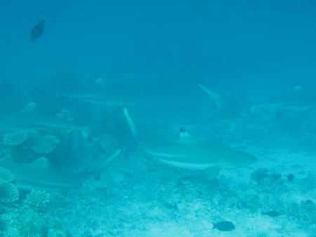 Bandos Island Resort,Nord Male Atoll,Malediven