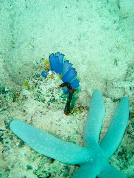 Prince John Dive Resort,Tanjung Karang,Sulawesi,Indonesien