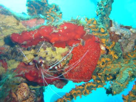 Scuba St. Lucia,Anse Chastanet,St. Lucia