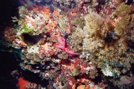 Mallorca Dragonera Indianerkopfhöhle,Spanien