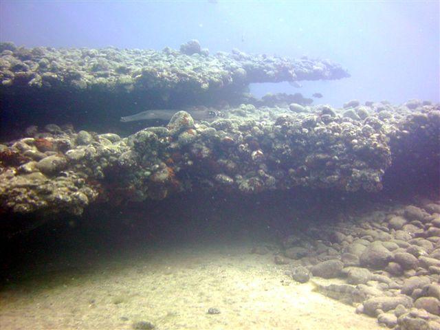 Arinaga / Unterwasserlandschaft, Arinaga,Gran Canaria,Spanien