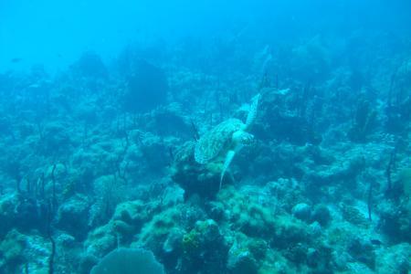 Dressel Divers Club,Bavaro,Dominikanische Republik