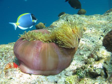 Carpe Diem,Malediven