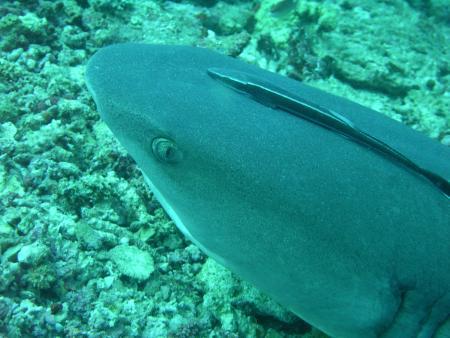 Smart Divers,Mabul,Malaysia