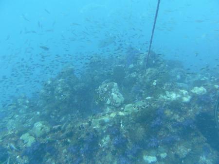 Yongala Dive,Alva Beach,Ayr,Queensland,Australien