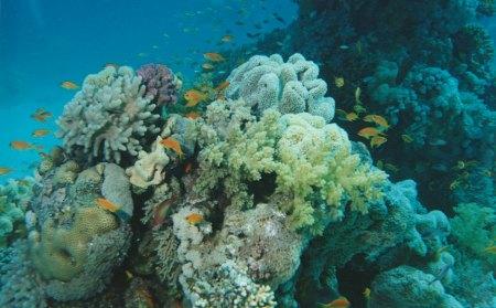Gordon Reef (Straße von Tiran),Ägypten