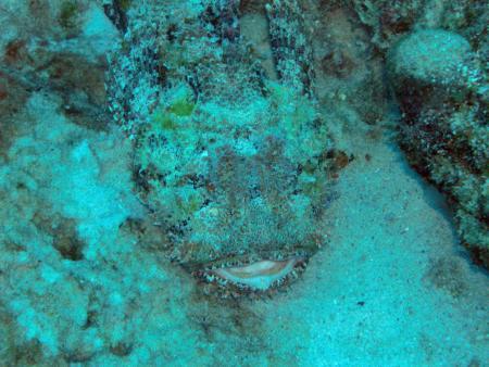 The Dive Shop Barbados (St.Michael),Barbados