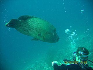 Ellaidhoo,Ari-Atoll,Malediven
