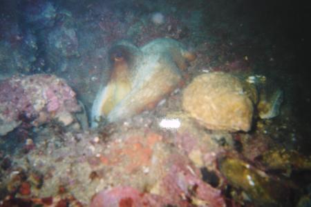 Tauchsport Divers Connection,Kufstein,Österreich