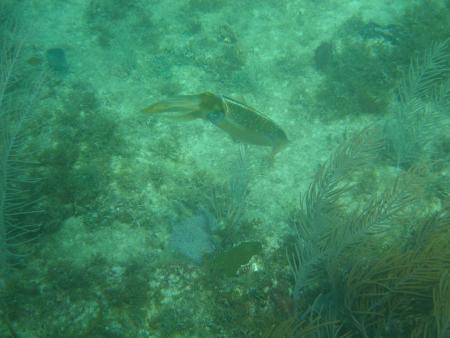 Pro Marine Bayahibe,Dominikanische Republik