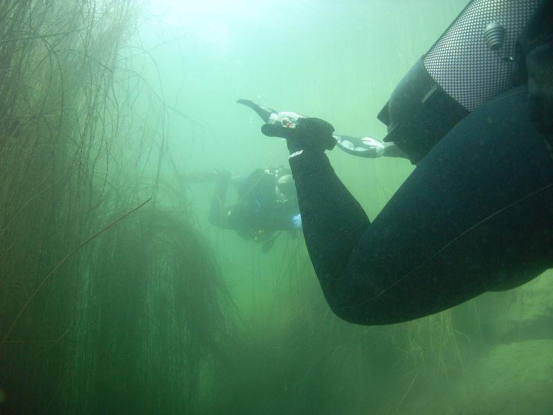 Untersuchung Fischweiher bei München, Fischweiher,München,Bayern,Deutschland
