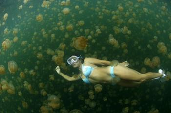 Jelly Fish Lake, Palau - Todd Essick