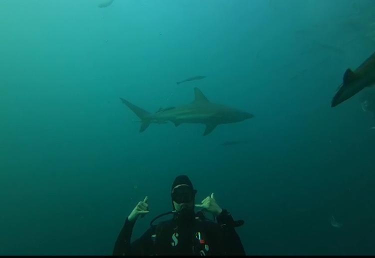 Blue Ocean Dive Resort, Umkomaas Aliwal Shoal, Südafrika