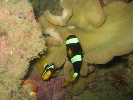 Dream Team Divers,Ya Nui,Phuket,Andamanensee,Thailand