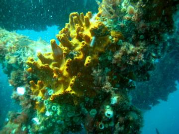 Albany Dive,Albany,West Australia,Australien