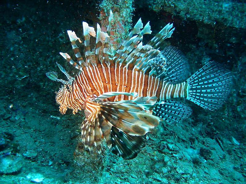 Vilamendhoo (Süd Ari Atoll), Vilamendhoo,Malediven