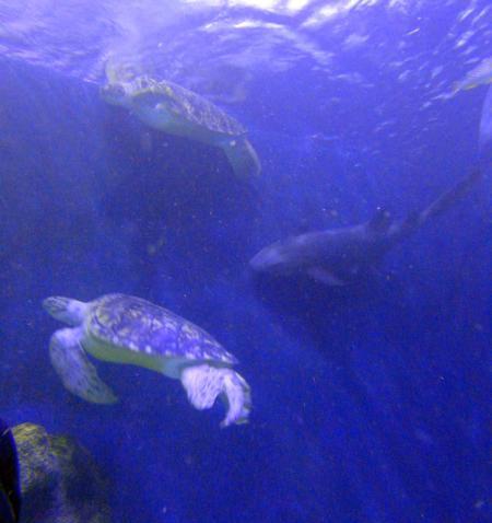 Sea Life,Oberhausen,Nordrhein-Westfalen,Deutschland