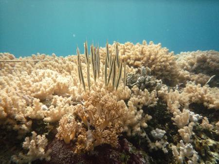 Dive Hub Antulang,Philippinen