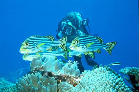Ihuru / Baros / Villingili / Lohifushi, Baros,Nord Male Atoll,Malediven