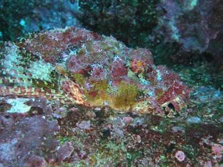 Galapagos Aggressor II,Galapagos,Ecuador
