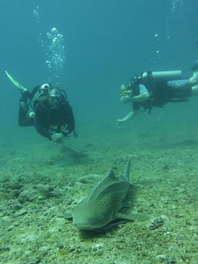Paradise Diving,Naiyang,Andamanensee,Thailand