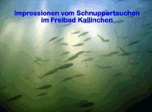 Motzener See Kallinchen,Brandenburg,Deutschland
