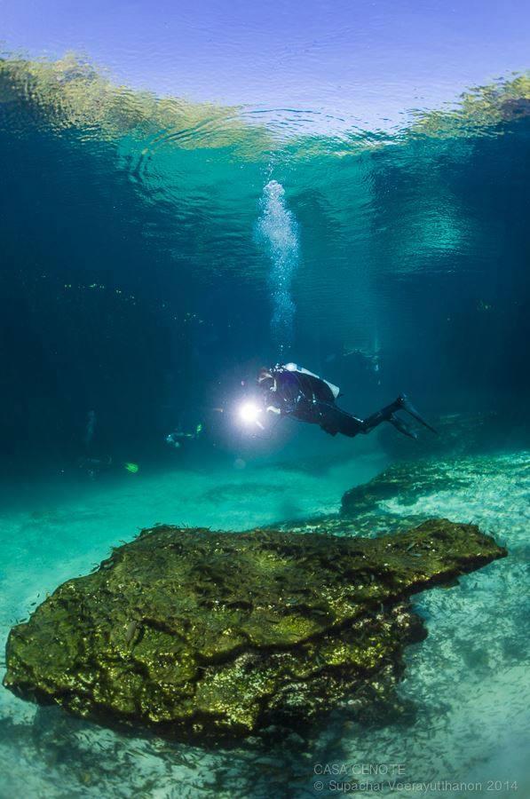 Cenoten Tauchen, Casa Cenote, Blue Motion Diver, Playa del Carmen, Mexiko