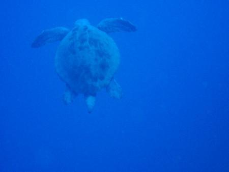 C&C Scuba Diving Kalkan,Türkei