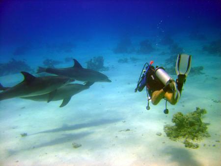 Eagle Ray Divers,Sun & Sea Hotel Hurghada,Hurghada,Ägypten