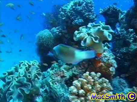 Hurghada - Turtle Bay, Turtle Bay,Hurghada,Ägypten