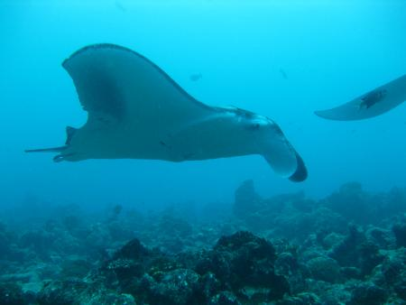 Stingray Safariboot,Malediven