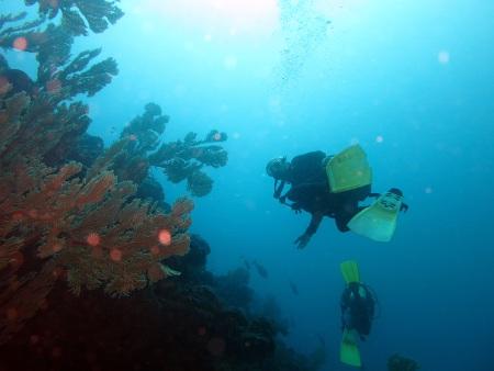 Prestige Explorer Diving Ltd. - Hotel Solana Beach,Mauritius