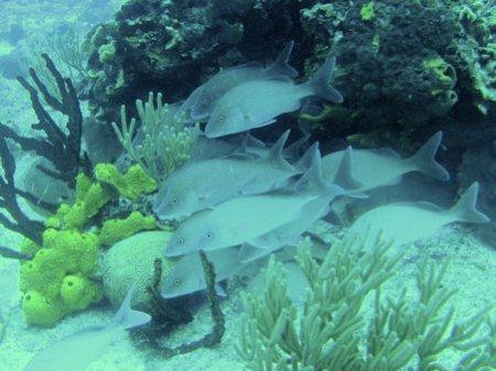 Dive Paradise Cozumel,Mexiko