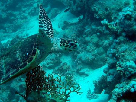 Euro-Divers,Grand Hotel,Hurghada,Abu Shilen,Ägypten