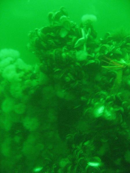 Bubblewatcher Tauchservice,Schleswig-Holstein,Deutschland,Schleswig Holstein