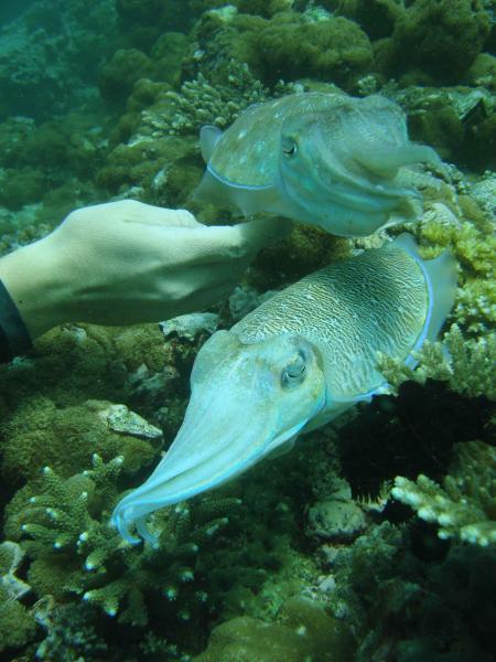 Aquascuba,Koh Lanta,Andamanensee,Thailand