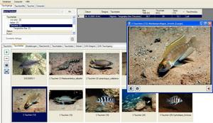 Mares ICON HD - Dive Organizer Viewer