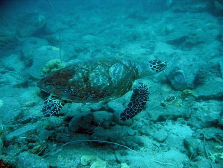 DivingScool - Bang Bao,Koh Chang Thailand,Golf von Thailand,Thailand