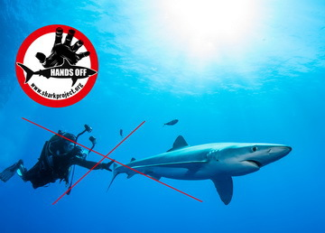 Fish&Trips - Epic-Shark-Expeditions