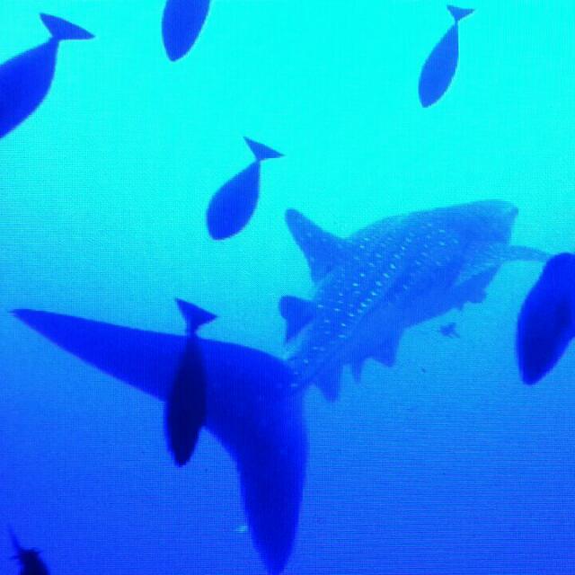 MAD - Divers Marsa Alam, Walhai, Ägypten Best, Ägypten