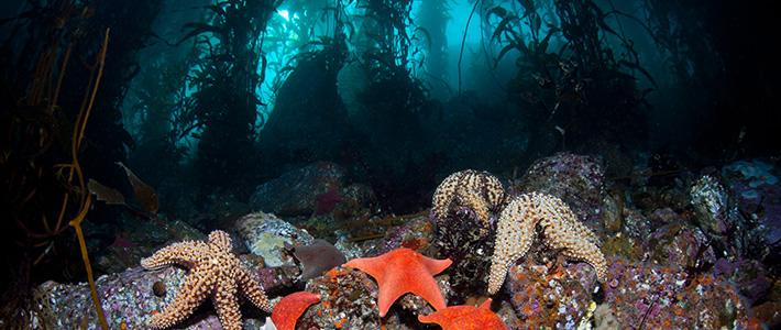 Bamboo Reef Enterprises, Monterey, USA, Kalifornien