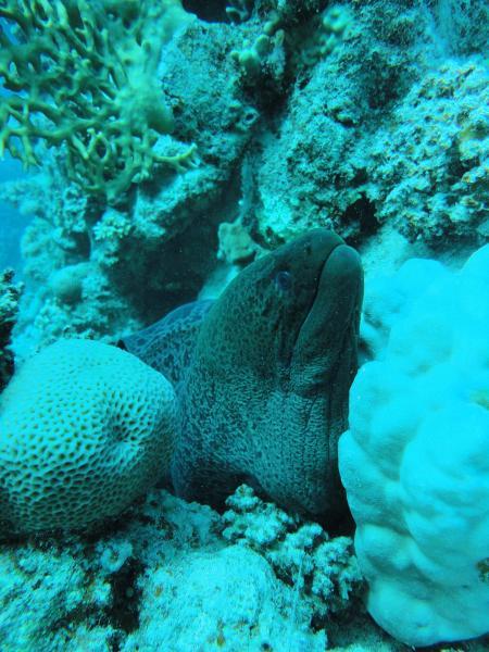 The Oasis, Werner Lau Diving Centers/Sinai Divers, Marsa